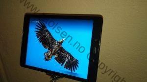 Eagle slides