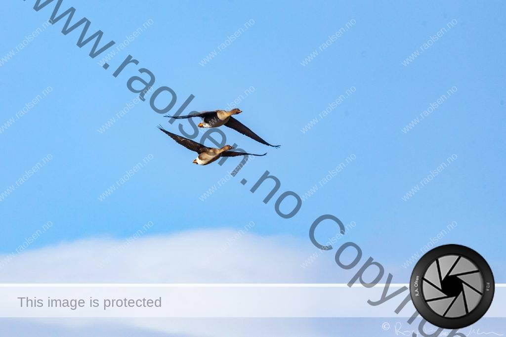 My bird photo collection